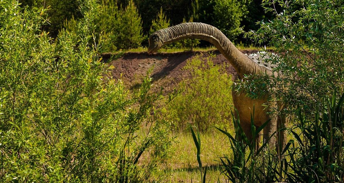 El Argentinosaurus no paraba nunca de crecer