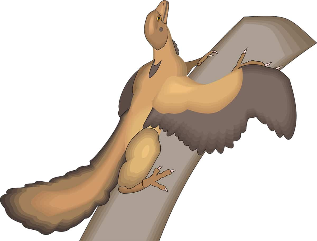 El Arqueópterix confirma la teoría de evolución de Charles Darwin