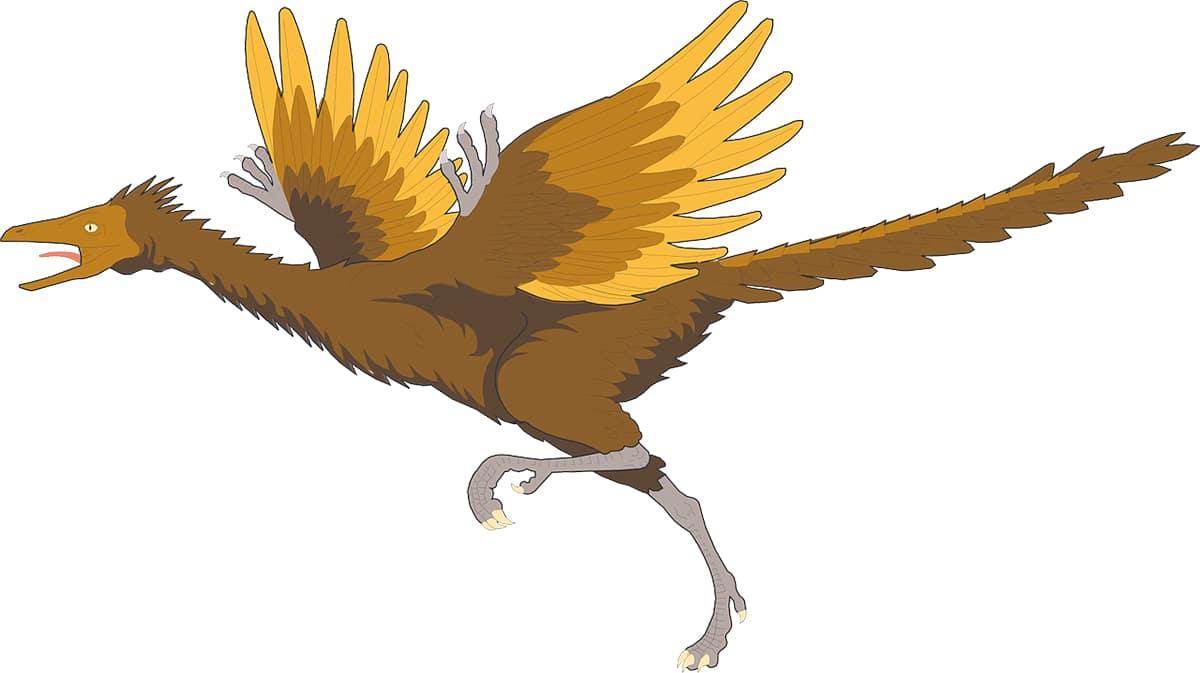 Existen varias teorías acerca del tipo de vuelo que empleaba el Arqueópterix