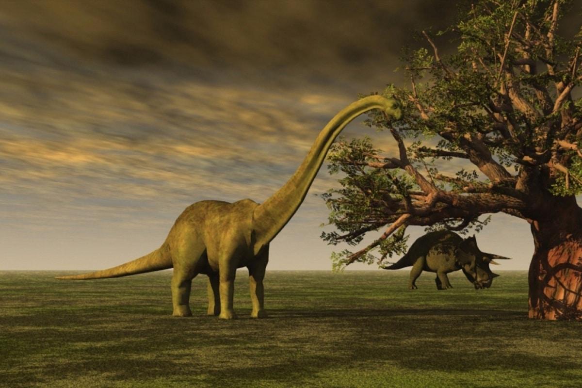 caracteristicas de los sauropodos