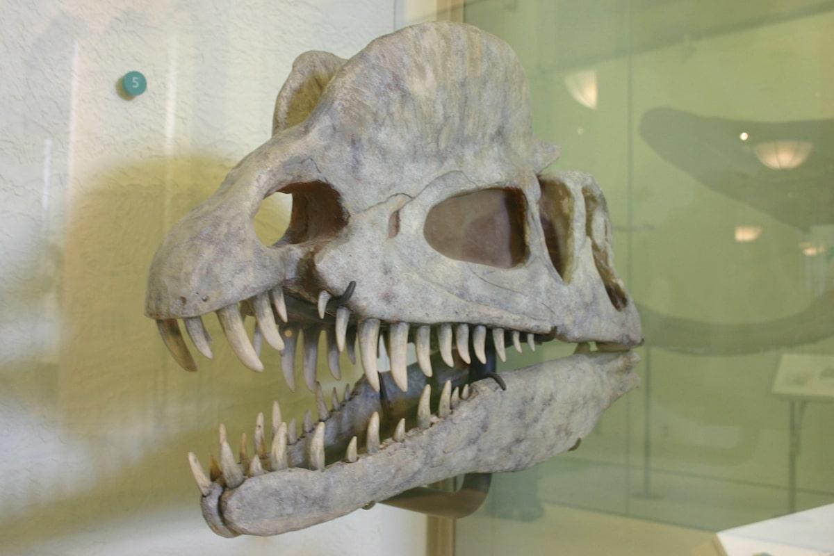 El Dilophosaurus tenía dos crestas longitudinales en la cabeza