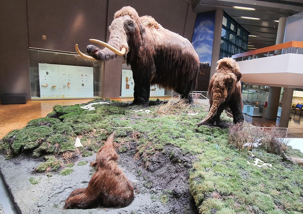 Se ha intentado clonar al mamut lanudo mediante el ADN de los fósiles encontrados