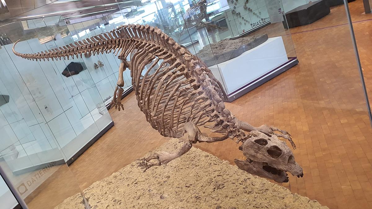 La ciencia que estudia los fósiles de dinosaurios es la Paleontología