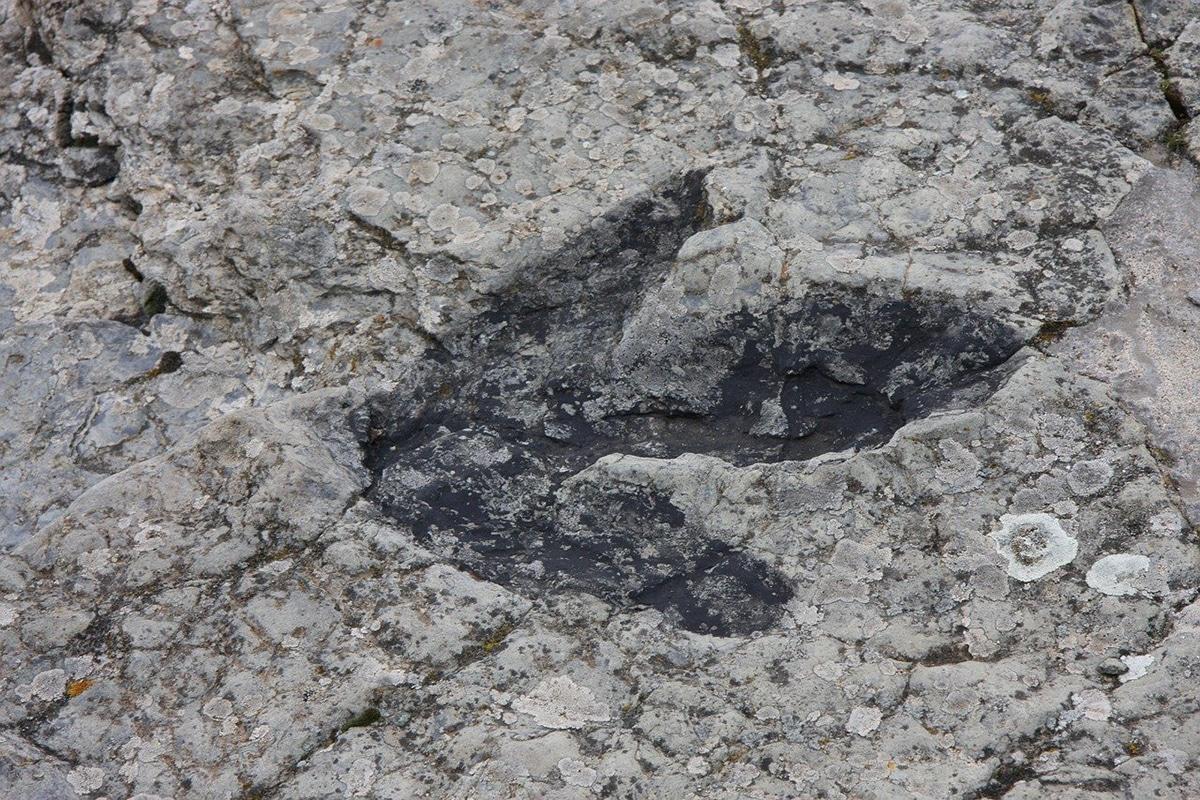 Los icnofósiles son impresiones en roca de huellas, nidos, huevos y excrementos