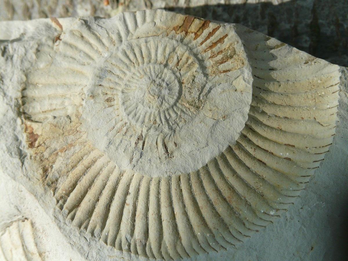 Los pseudofósiles más comunes son los del amonite