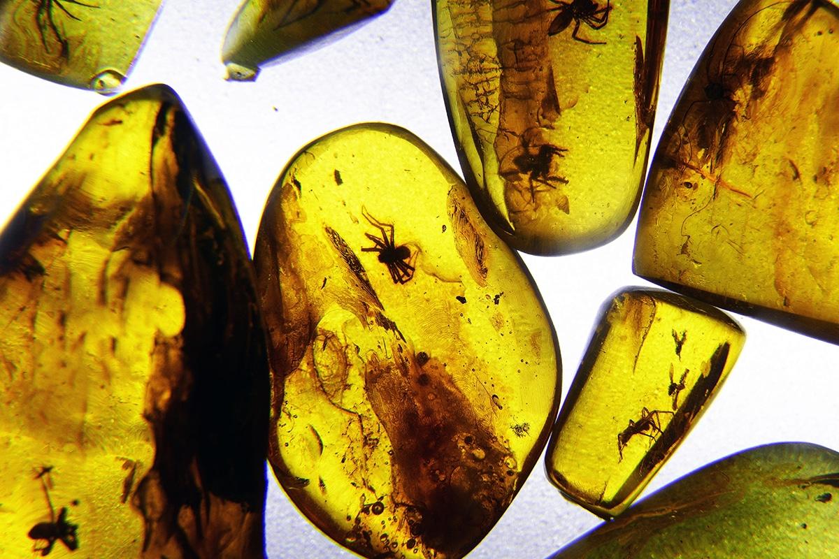 En la resina fósil se suelen ver insectos y pequeños animales que han quedado atrapados en la resinad e los árboles prehistóricos