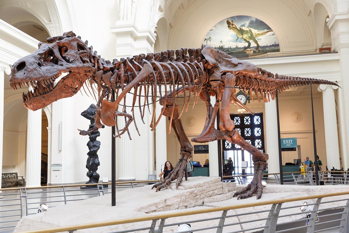 De los fósiles de dinosaurios, el del Tiranosaurio Rex llamado Sue es el mejor conservado