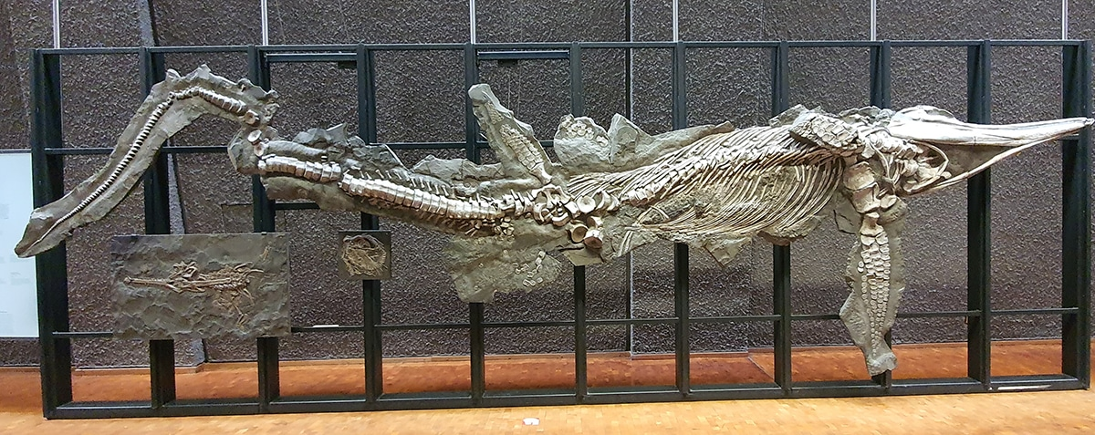 Los fósiles de dinosaurios dan mucha información