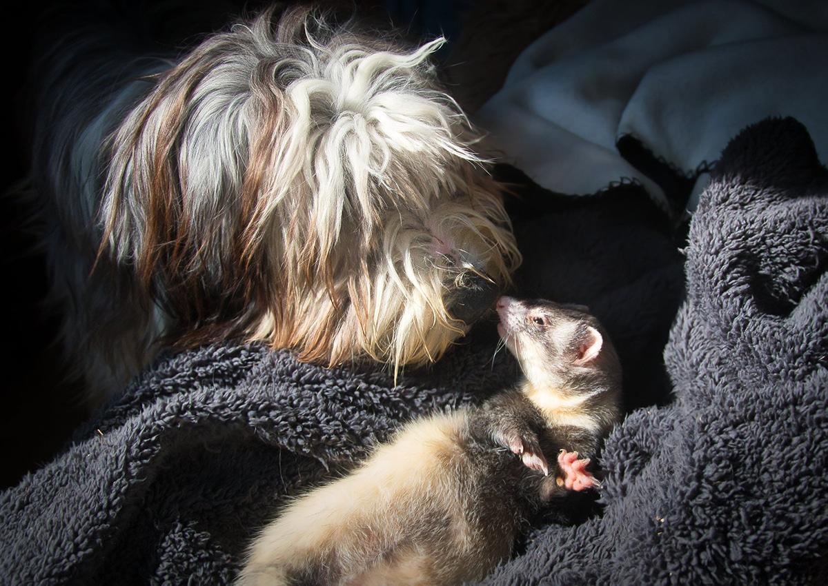 El cariño entre un perro y un hurón plasmado en una foto