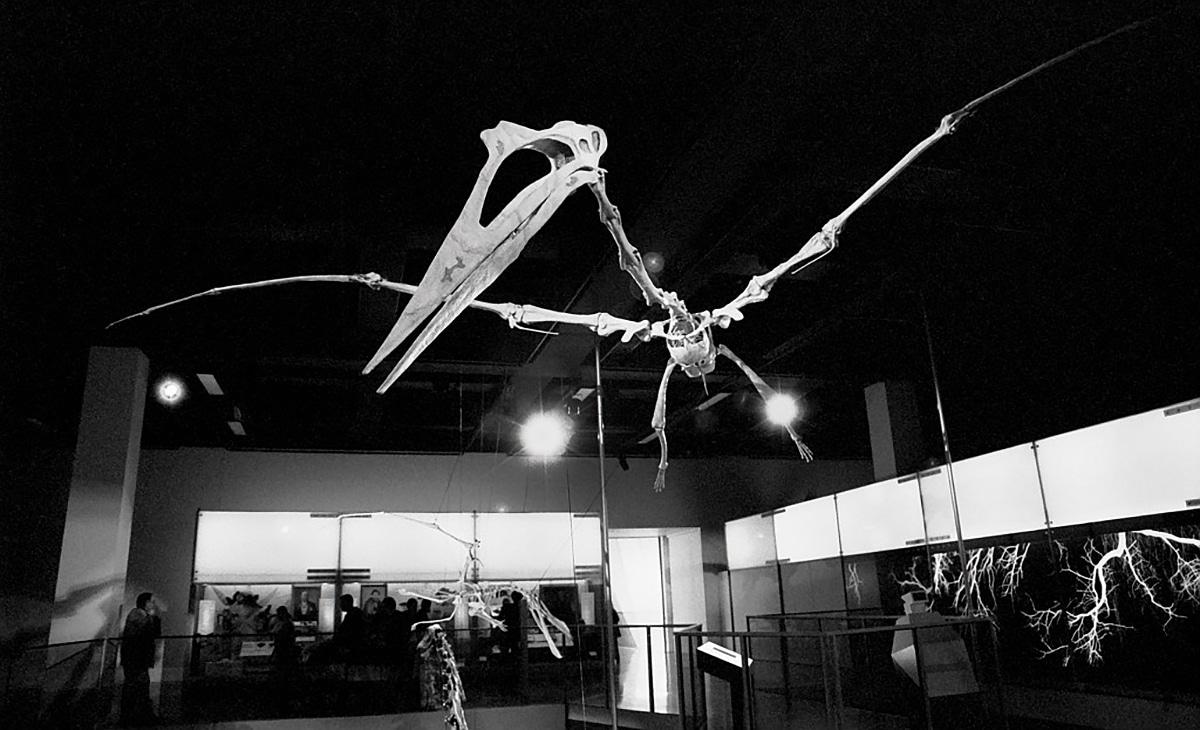 El Quetzalcoatlus tenía un pico agudo y afilado