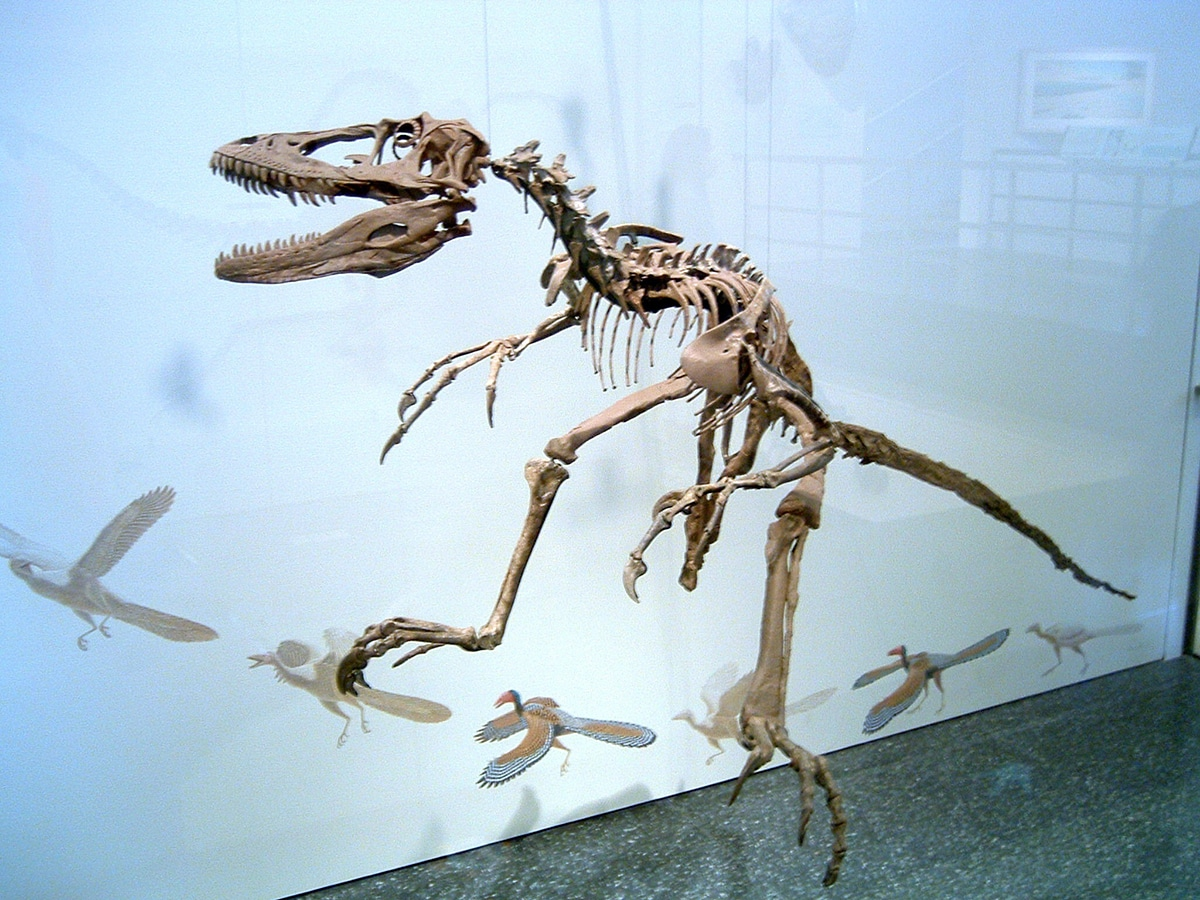 Las aves son el resultado de la evolución de los Terópodos