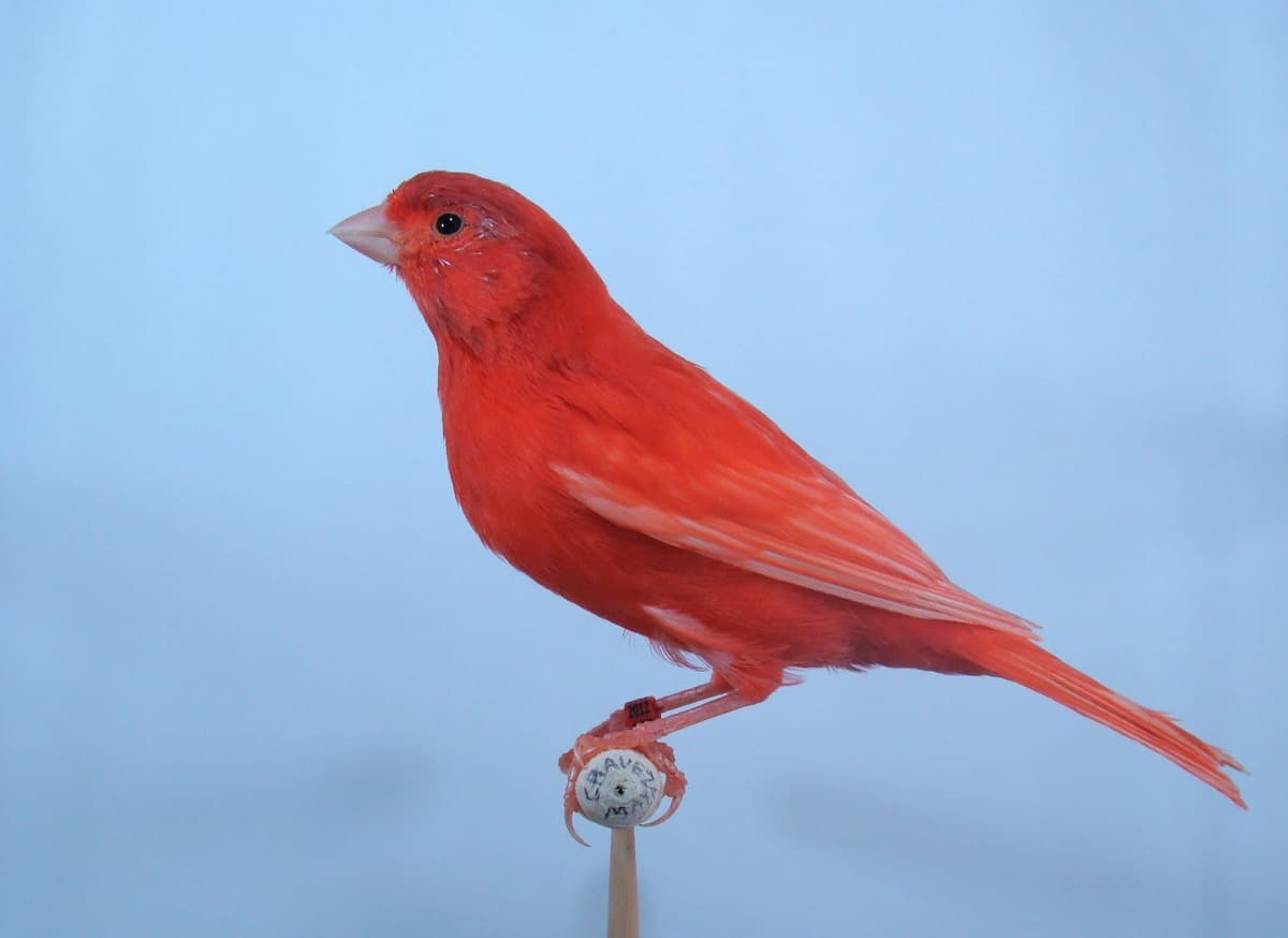 variedad en rojo