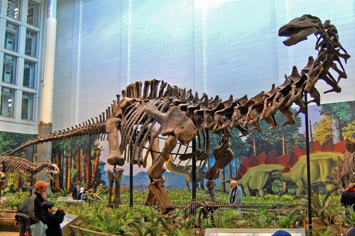 apatosaurus fosiles