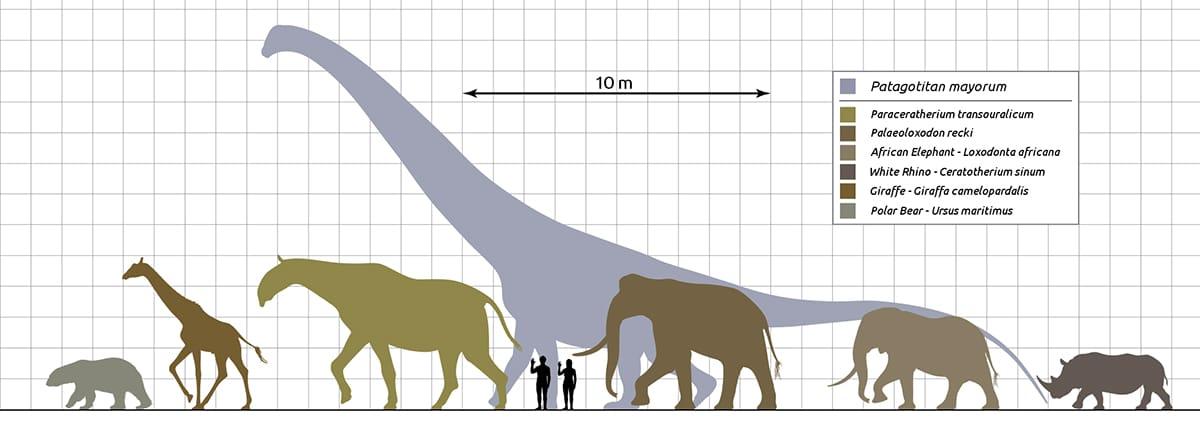 El dinosaurio mas grande pesaba lo mismo que 14 elefantes