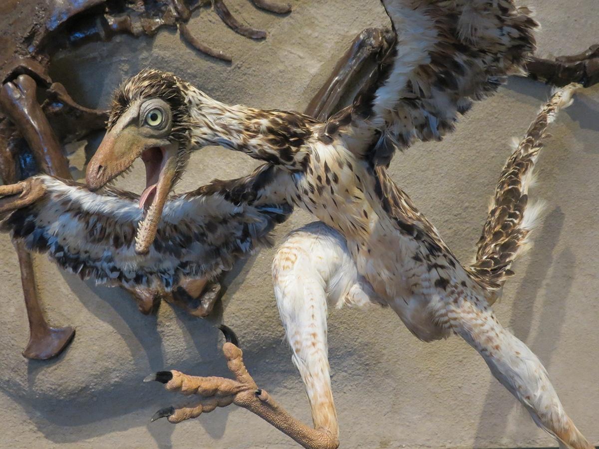 Los dinosaurios con plumas eran sobre todo terópodos