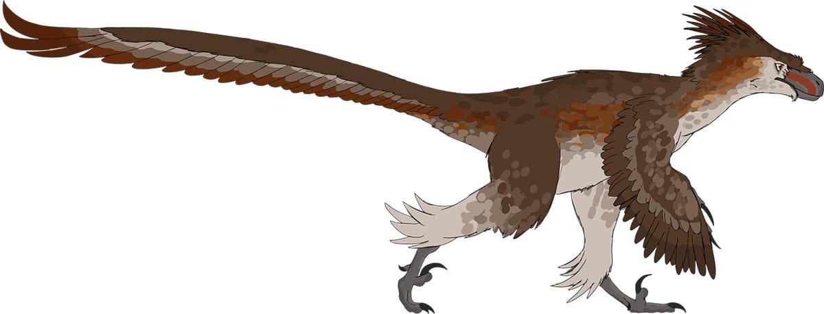 Entre los dinosaurios con plumas destacan el Velociraptor y el Microraptor