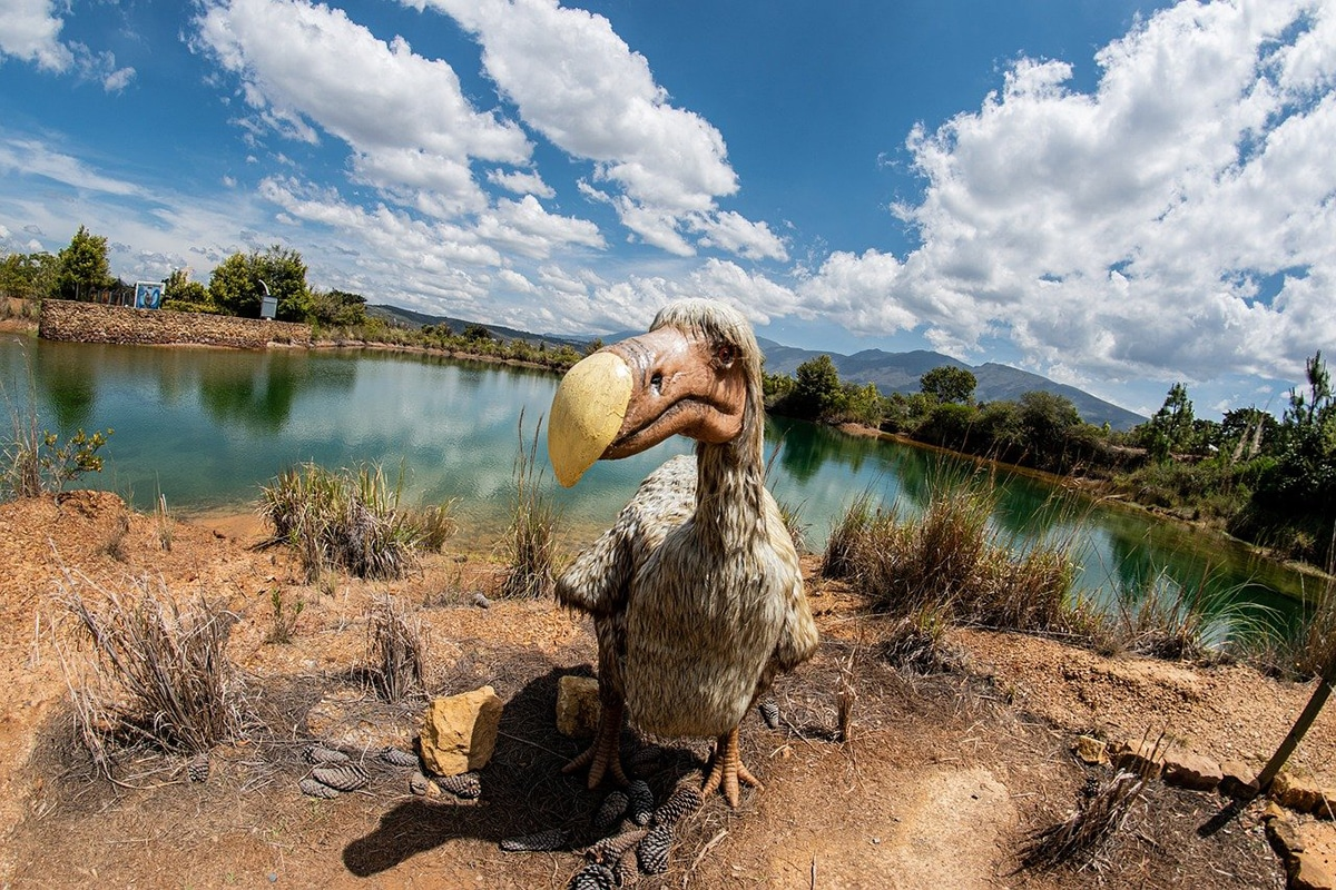 El dodo aparece en muchas novelas literarias