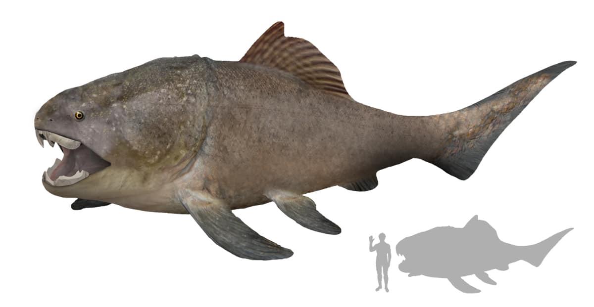 El Dunkleosteus era un superdepredador en su ecosistema