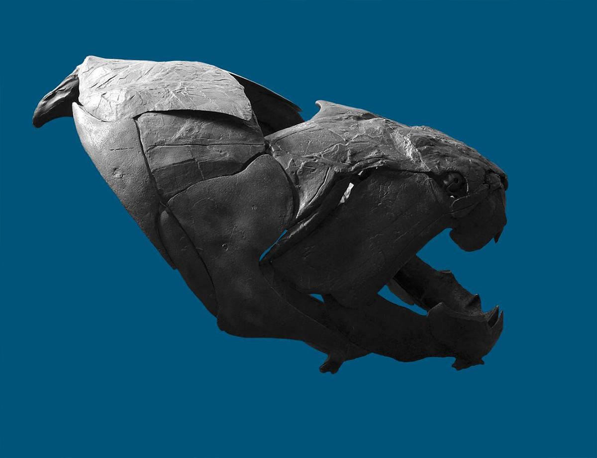 El Dunkleosteus tenía placas óseas que parecían una armadura