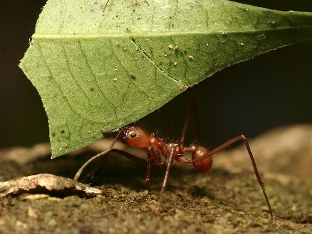 hormigas y accion