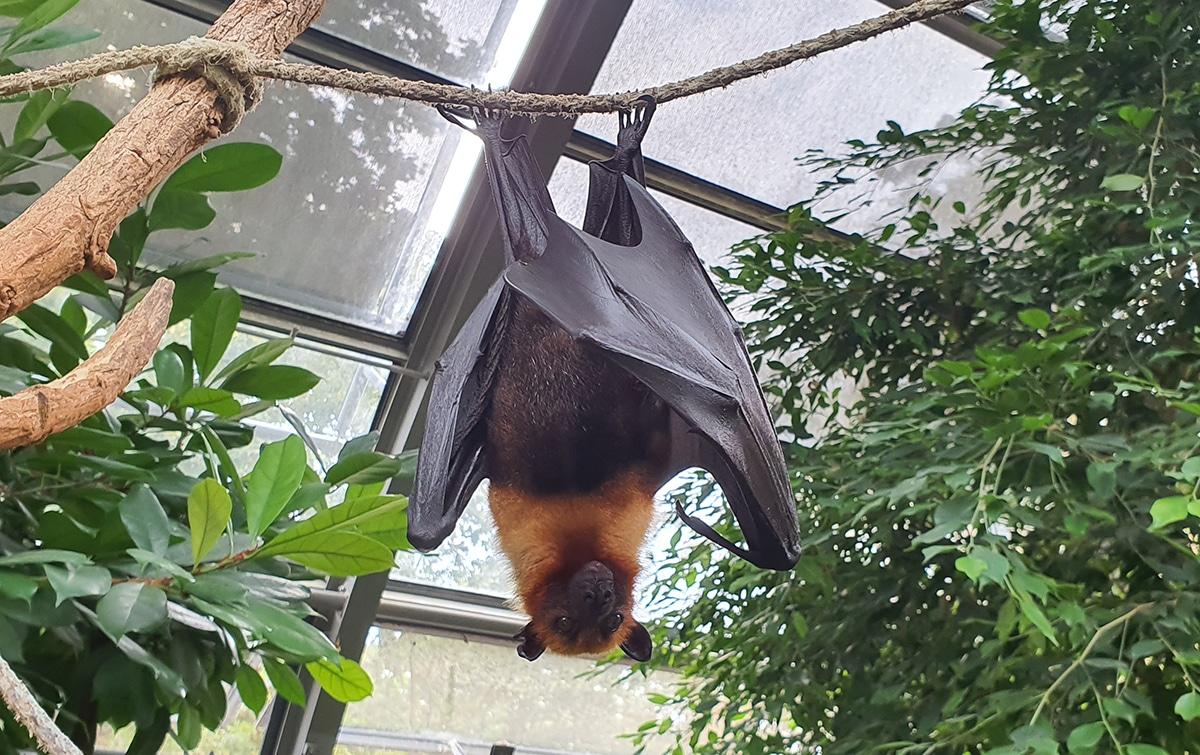 Los murciélagos sin importantes para el ecosistema