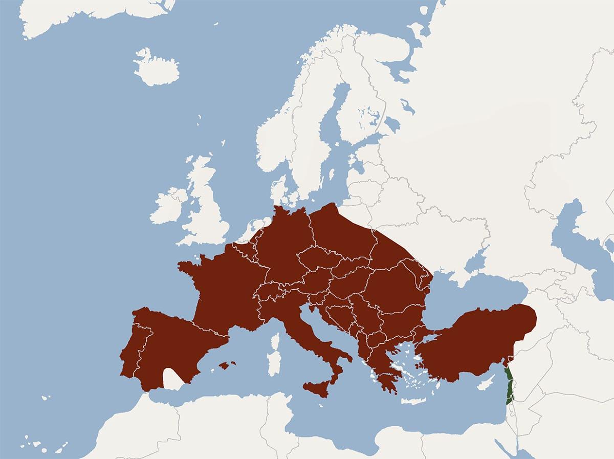 El Myotis myotis vive en Europa central y en Europa del sur