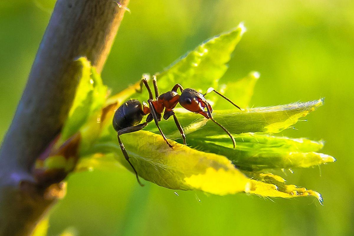 La hormiga y su picadura
