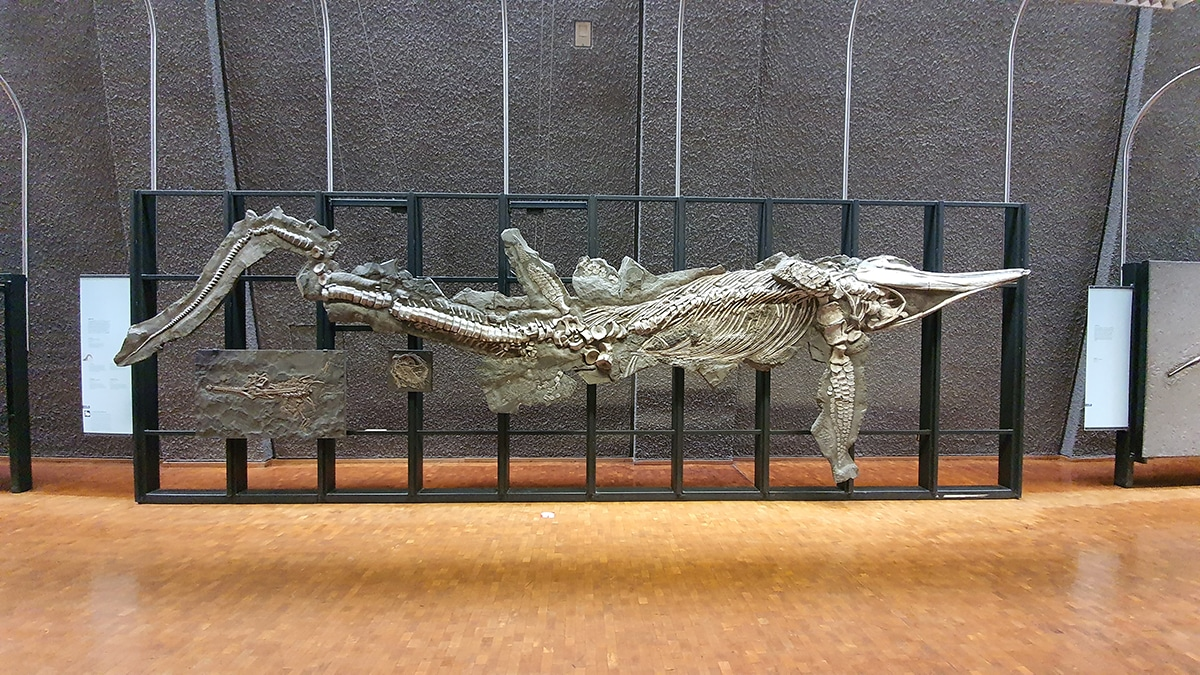 Existían dinosaurios acuáticos carnívoros y omnívoros