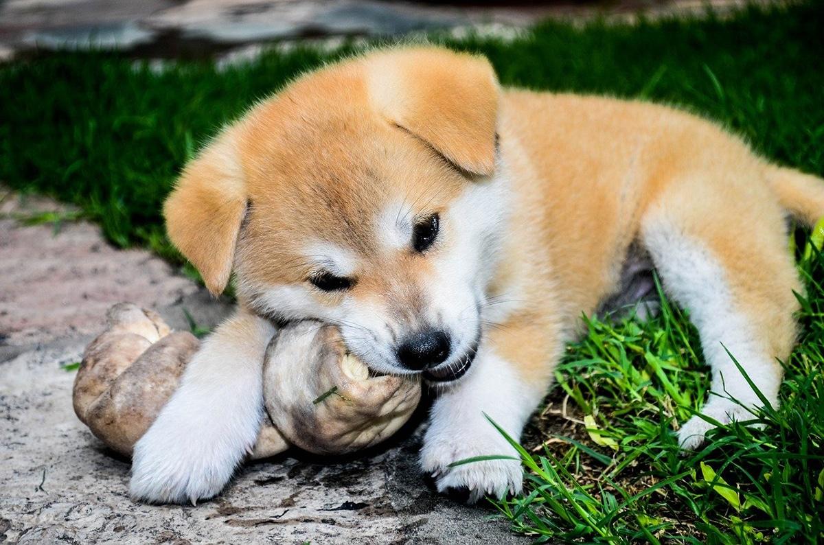 Los perros necesitan una dieta variada y equilibrada
