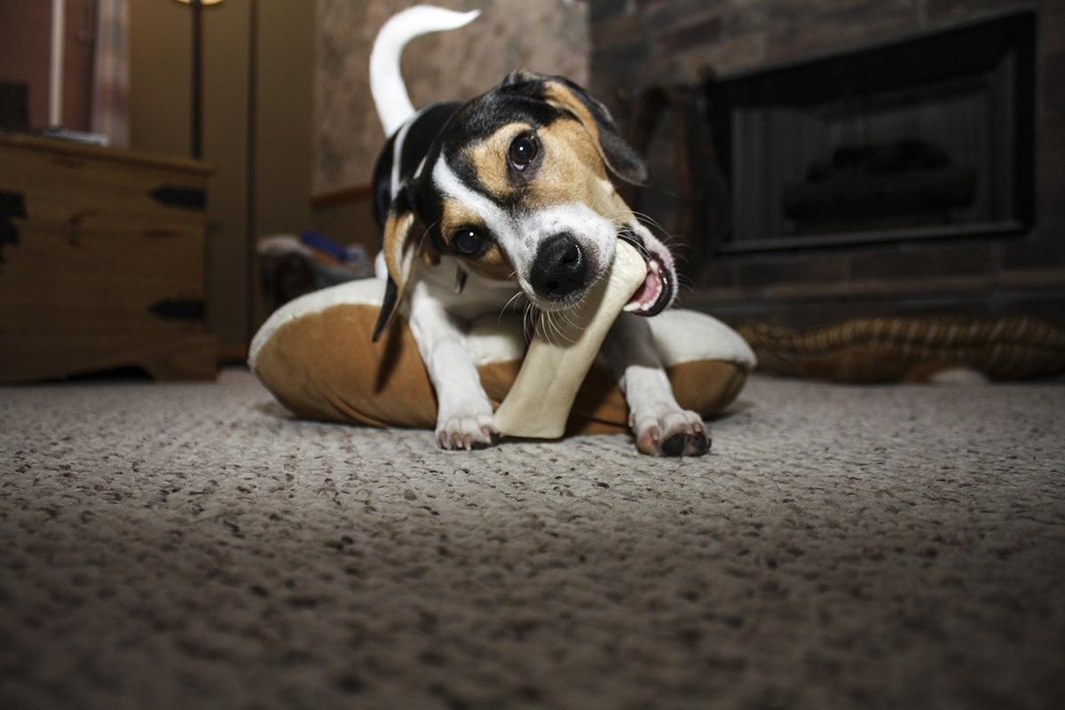 Hay que evitar que los perros consuman un exceso de sal