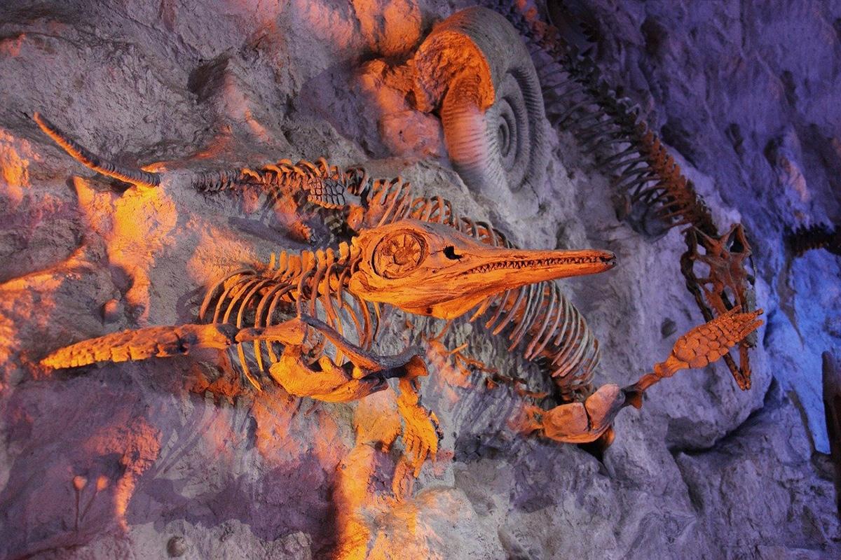 Los dinosaurios acuáticos eran en realidad reptiles marinos
