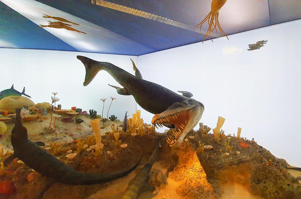 Los grandes reptiles marinos se extinguieron en el Jurásico