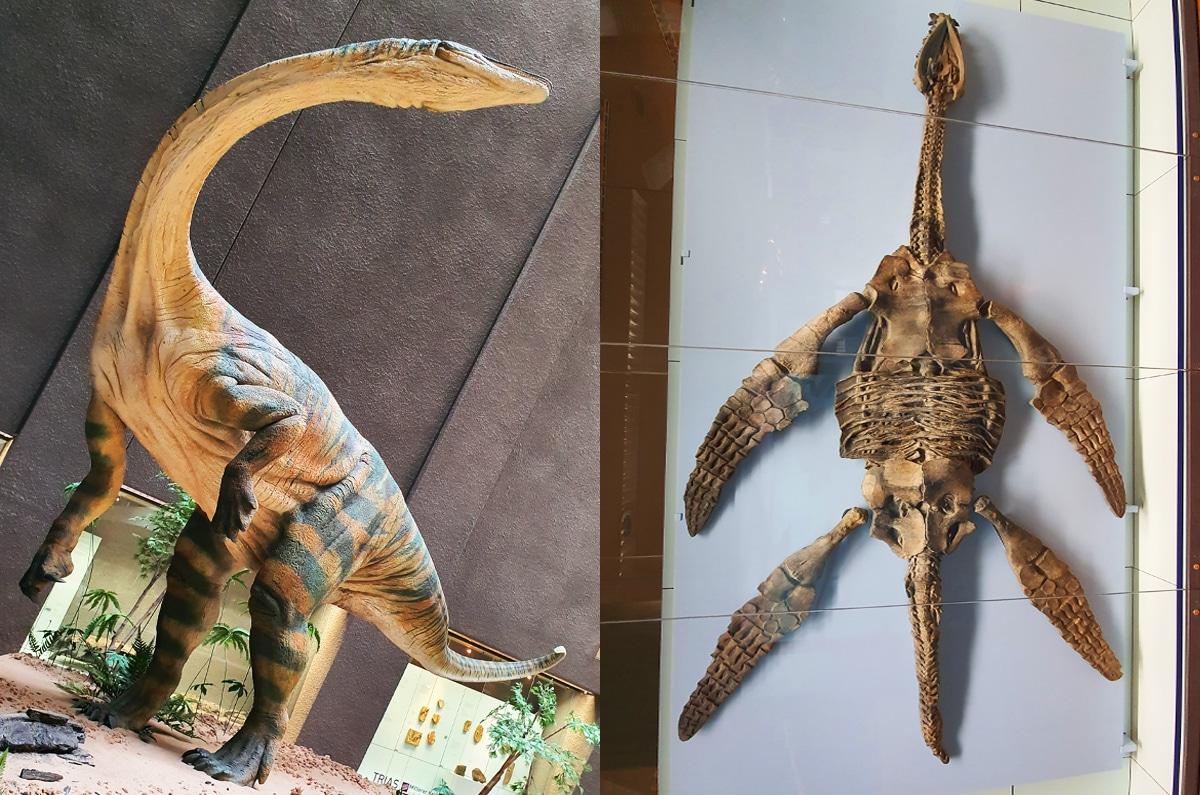 Diferencias entre dinosaurios y reptiles