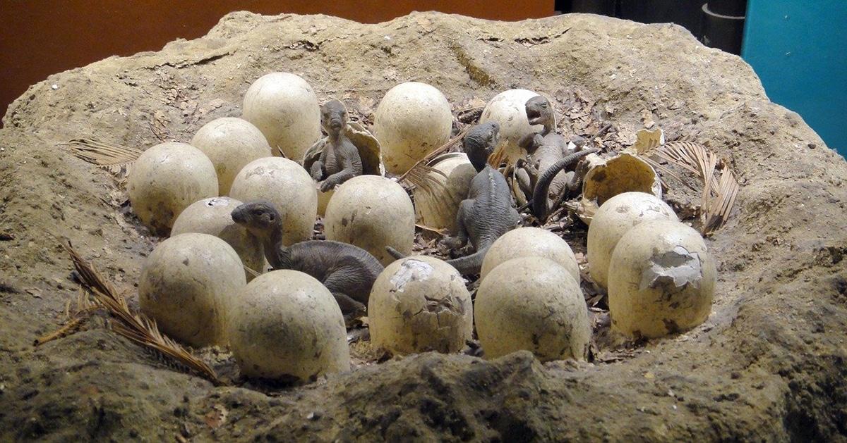 Durante el Jurásico hubo más diversidad de arcosaurios