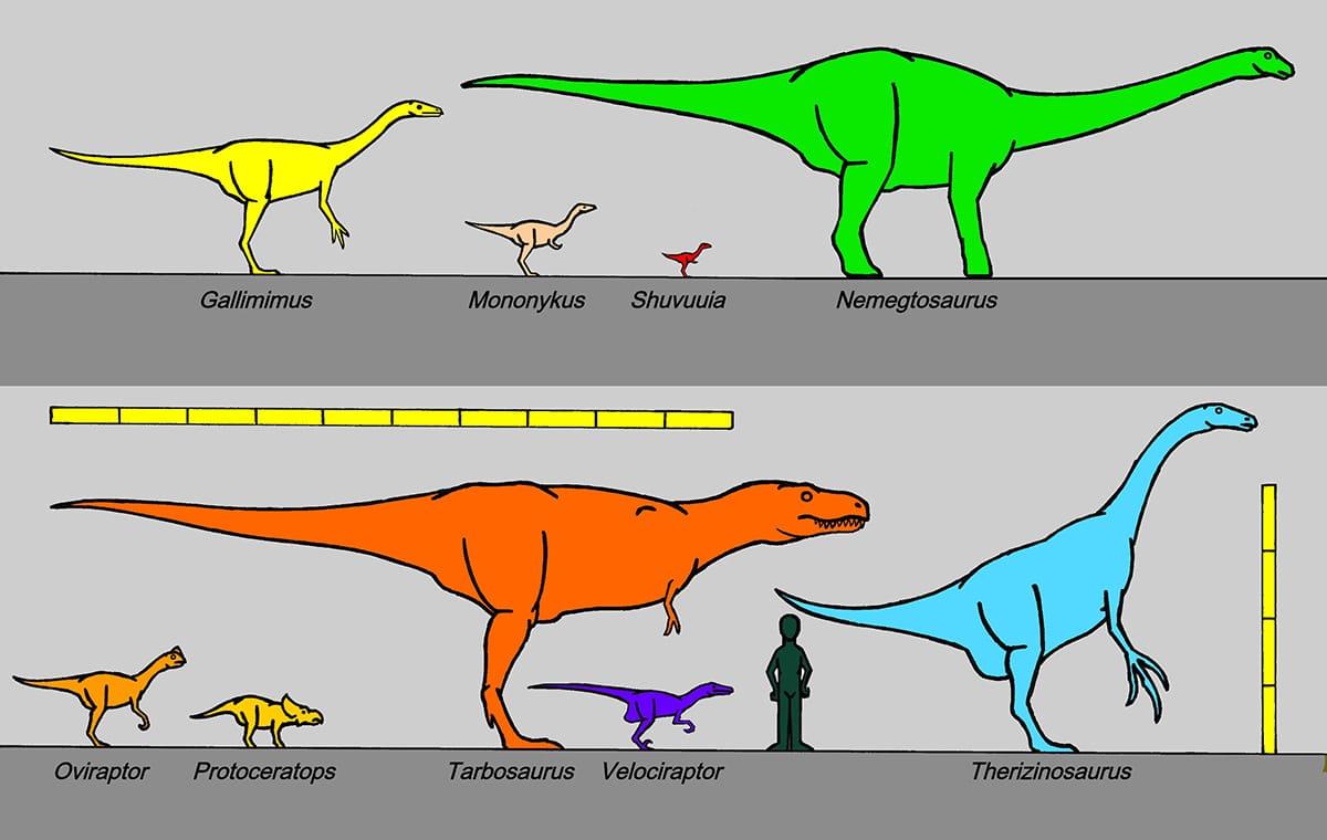 El Gallimimus es el más grande de los Ornithomimidae
