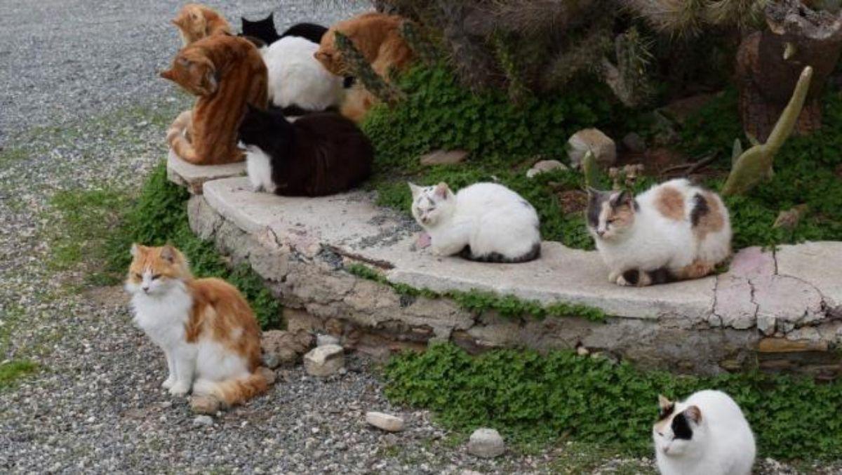 También en Brasil existe una isla de los gatos