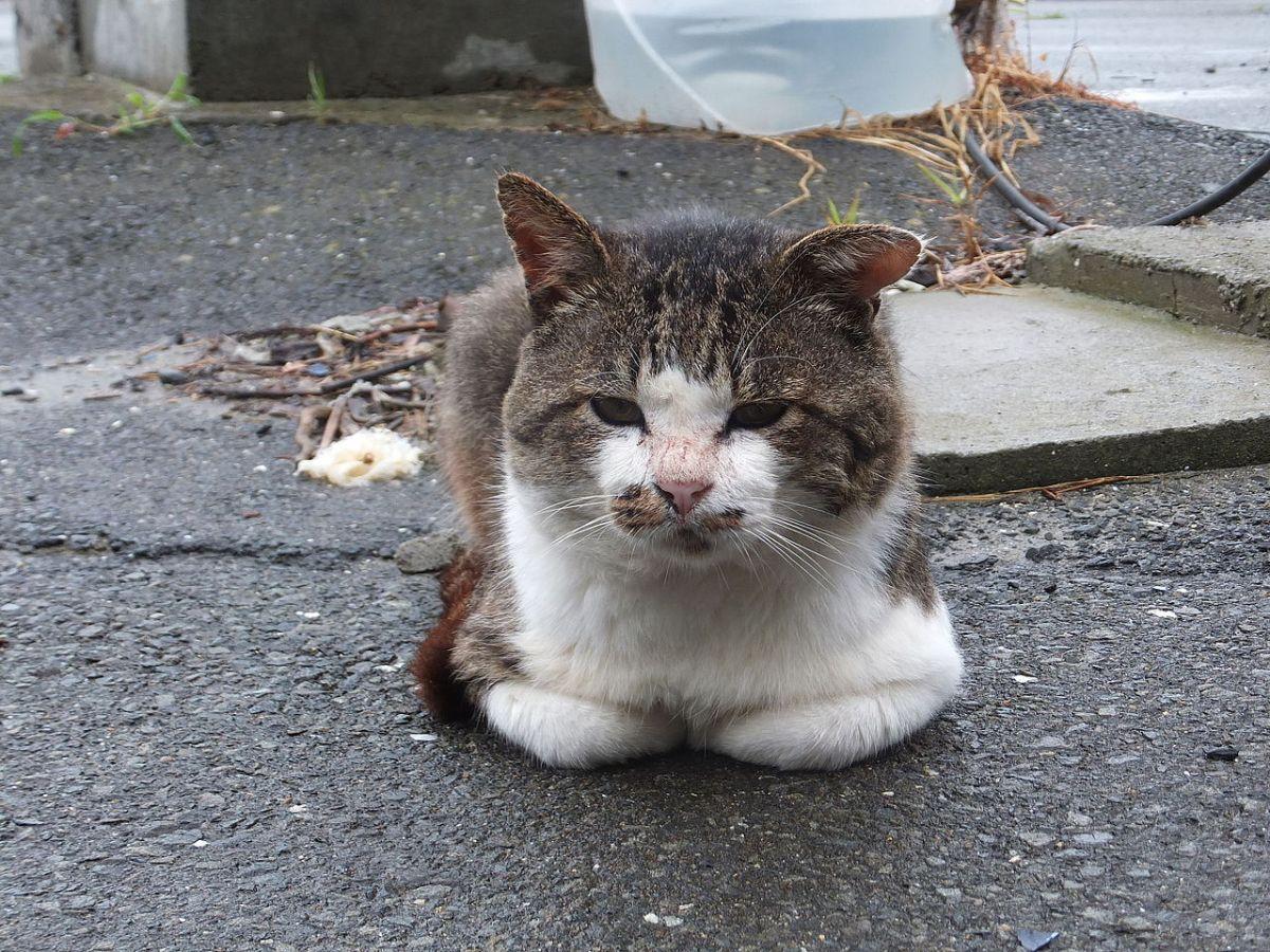 isla de los gatos Umashima