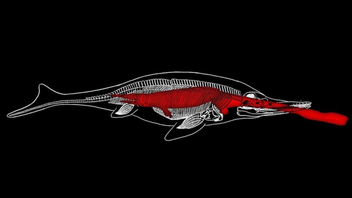 morfologia del lagarto pez