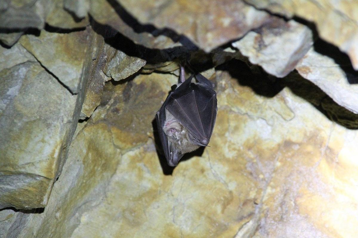 La caca de los murciélago también se conoce como guano