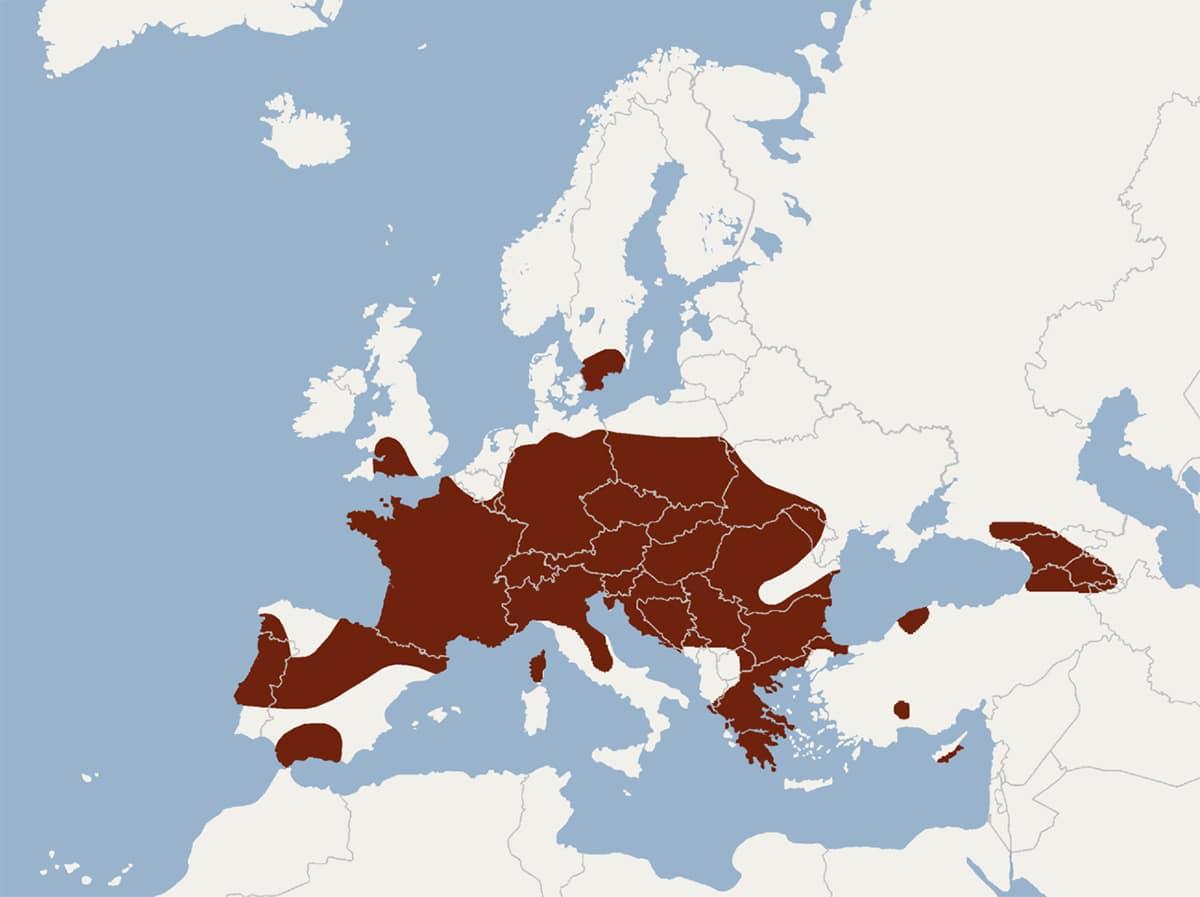 El Myotis bechsteinii se encuentra en varios países europeos