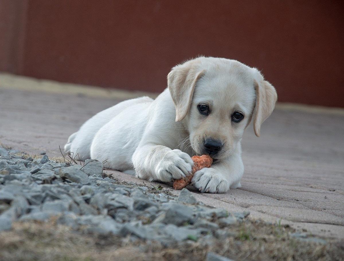 Los canes necesitan un buen equilibrio entre cantidad y calidad del alimento