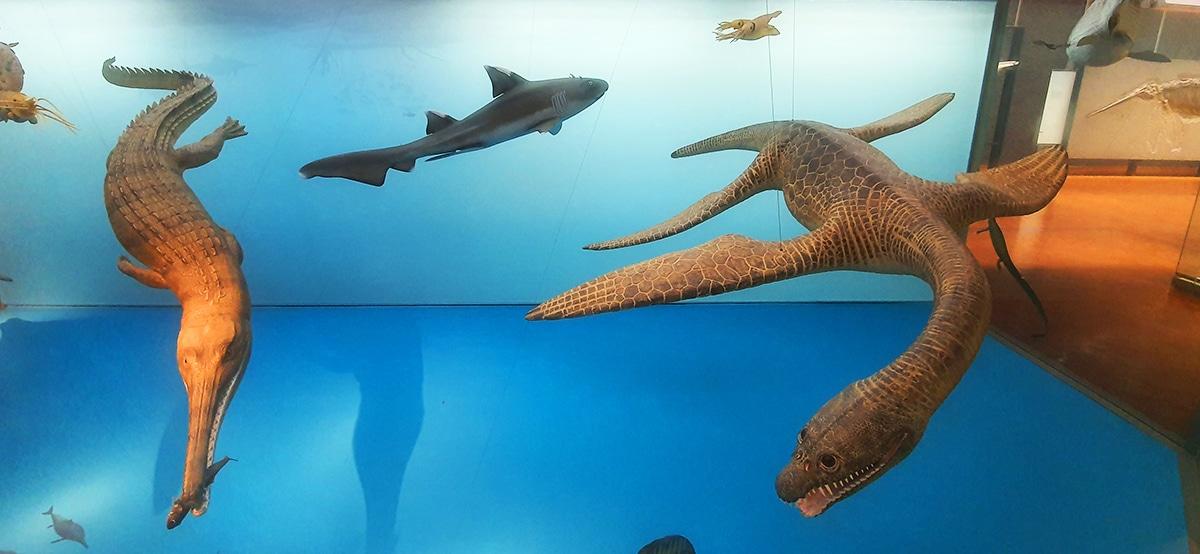 Los plesiosaurios son los reptiles acuáticos más conocidos