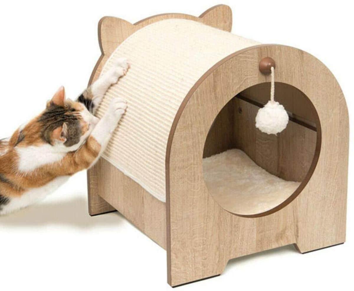 Cómo enseñarles a usar rascadores para gatos