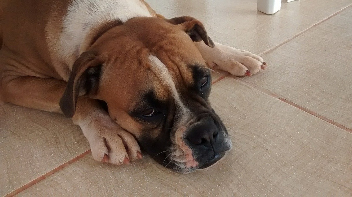 Existen diferentes tipos de bultos que pueden aparecer en los perros