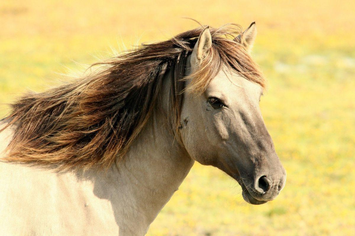 Dónde podemos encontrar caballos