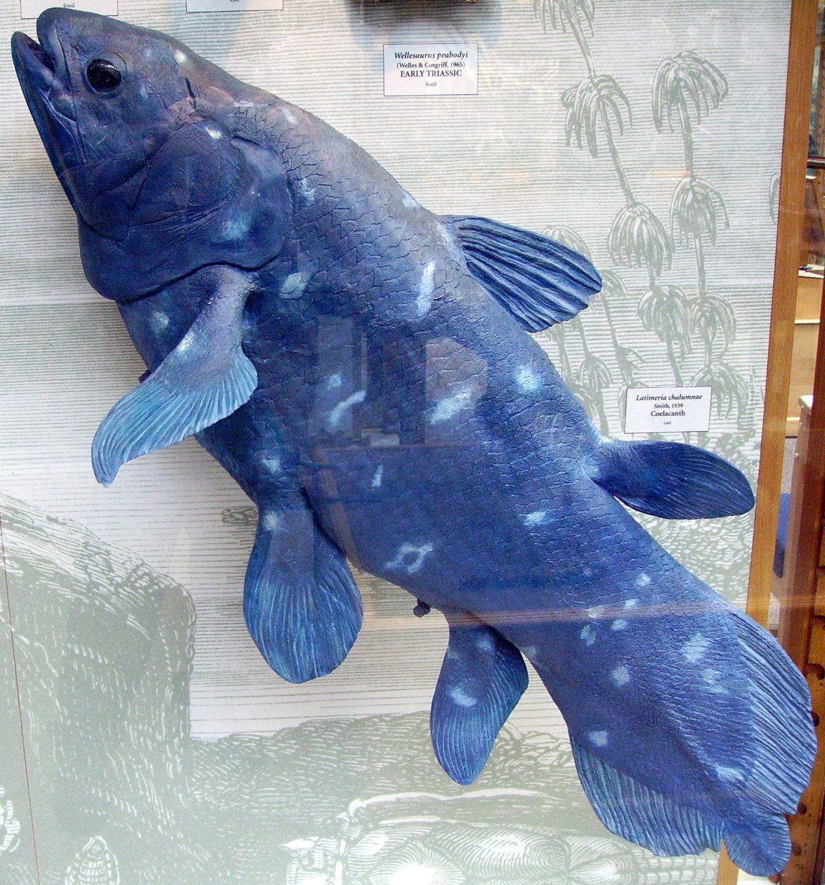 Hábitat del celacanto