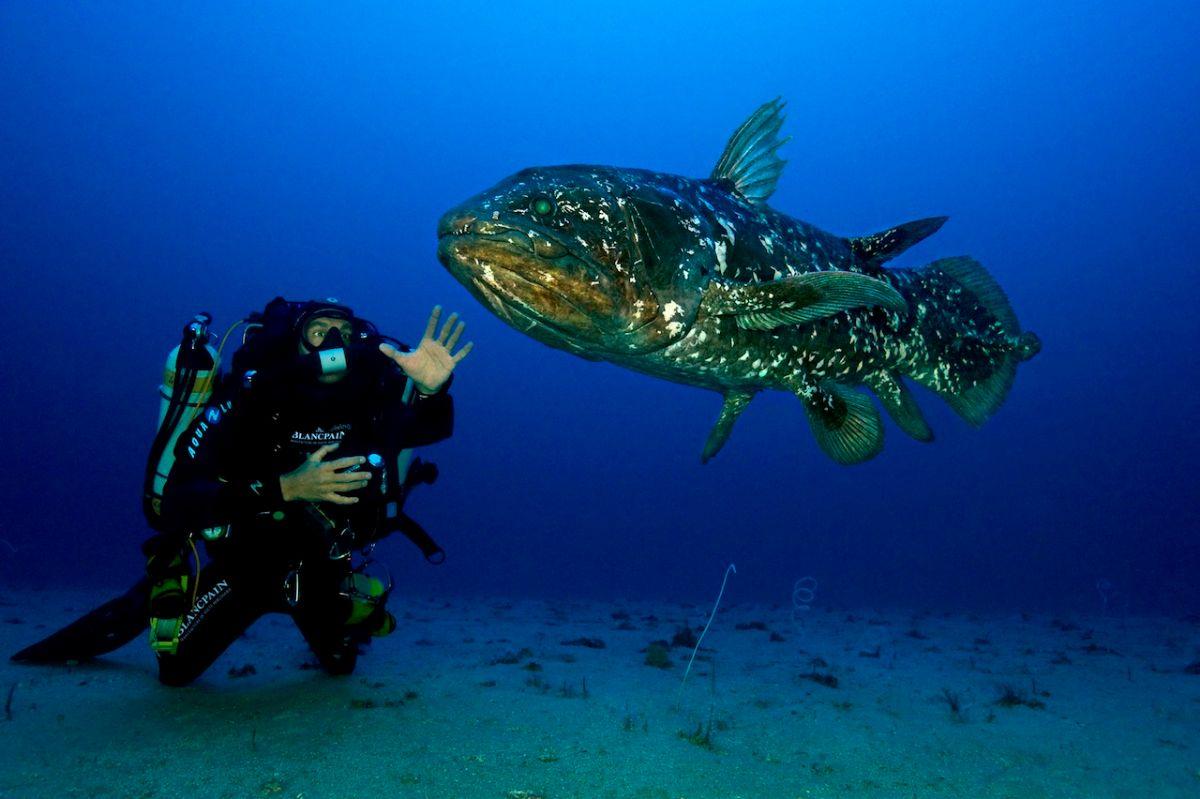 Curiosidades sobre el celacanto