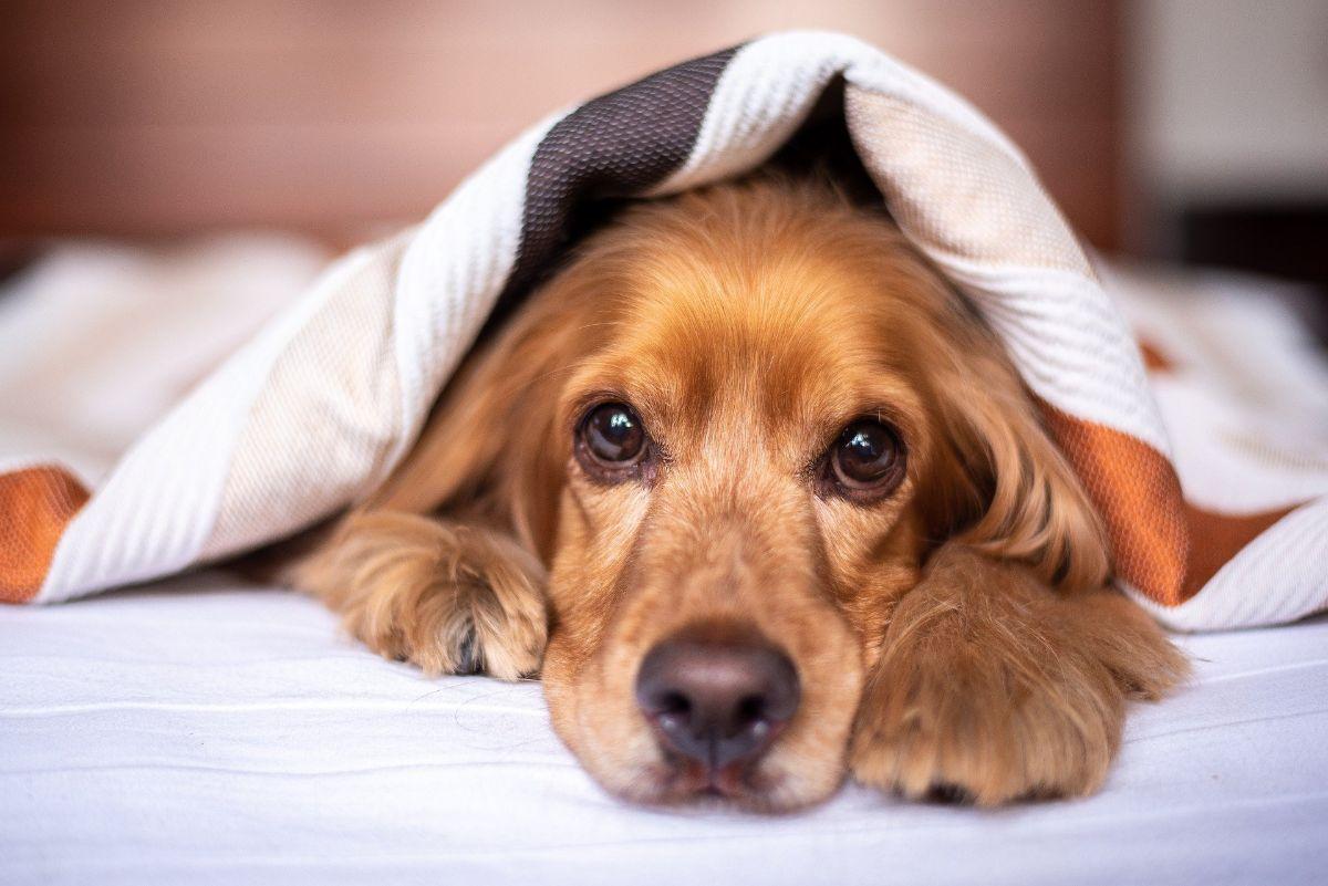 Por qué los perros necesitan una cama