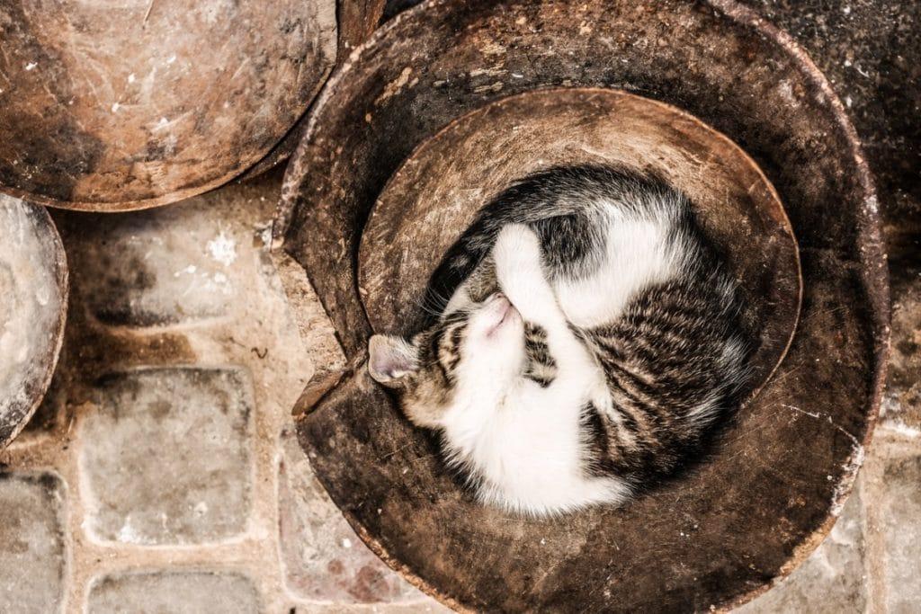 Comportamiento de los Gatos