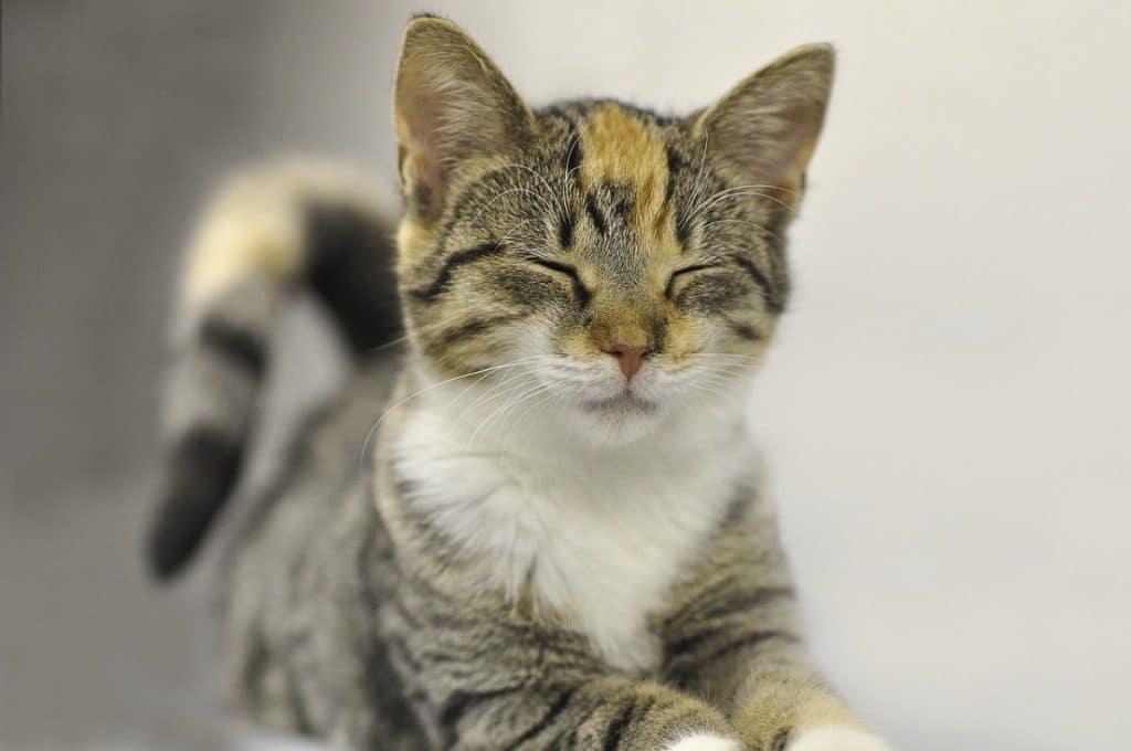 Comportamiento de los Gatos Amasar